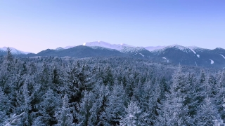 Mountain Trees Landscape Winter Misty Alpine Landscape Golden Hour Mountain Tops Winter Vacation Snowy Pines Vibrant Colors Aerial 4k