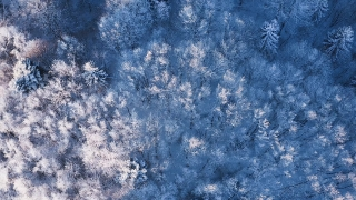 Mountain Frosty Winter Trees Beautiful Nature Golden Hour Holiday Travel And Tourism Frosty Tree Tops Vibrant Colors Aerial 4k
