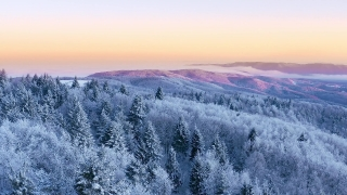 Mountain Frosty Winter Trees Alpine Landscape Early Morning Sunrise Holiday Travel And Tourism Frosty Tree Tops Vibrant Colors Aerial 4k