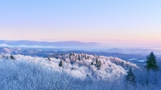 Snow Covered Winter Trees Misty Alpine Landscape Early Morning Sunrise Holiday Travel And Tourism Frosty Pines Vibrant Colors Aerial 4k