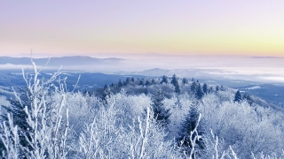 Snow Covered Winter Trees Alpine Landscape Golden Hour Winter Vacation Frosty Tree Tops Vibrant Colors Aerial 4k