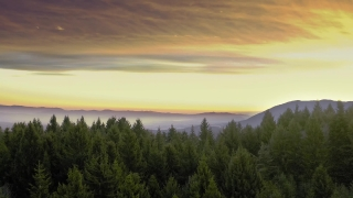 Aerial Shot Of Mountain Winter Pines Golden Hour Colors Colorful Purple Orange Sky Cold Paradise Cinematic Flight 4k