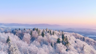 Mountain Frosty Winter Trees Misty Alpine Landscape Early Morning Sunrise Holiday Travel And Tourism Snowy Pines Vibrant Colors Aerial 4k