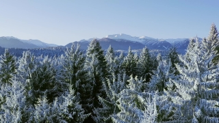 Mountain Frosty Winter Trees Misty Alpine Landscape Golden Hour Mountain Tops Holiday Travel And Tourism Frosty Pines Vibrant Colors Aerial 4k