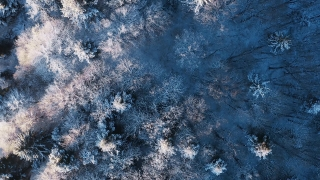 Mountain Frosty Winter Trees Beautiful Nature Early Morning Sunrise Holiday Travel And Tourism Frosty Pines Vibrant Colors Aerial 4k