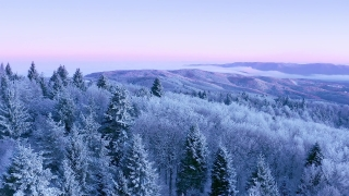 Snow Covered Winter Trees Beautiful Nature Golden Hour Winter Vacation Frosty Pines Vibrant Colors Aerial 4k