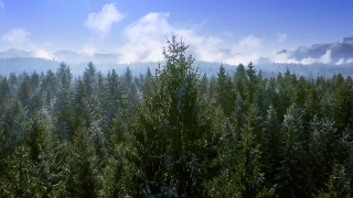 Snow Covered Winter Trees Misty Alpine Landscape Golden Hour Winter Vacation Frosty Pines Vibrant Colors Aerial 4k