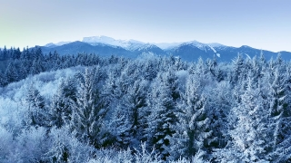 Mountain Frosty Winter Trees Misty Alpine Landscape Golden Hour Mountain Tops Holiday Travel And Tourism Snowy Pines Vibrant Colors Aerial 4k
