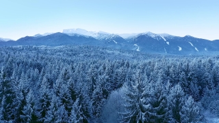Snow Covered Winter Trees Beautiful Nature Golden Hour Mountain Tops Winter Vacation Snowy Pines Vibrant Colors Aerial 4k