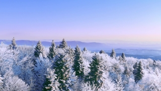 Snow Covered Winter Trees Alpine Landscape Early Morning Sunrise Holiday Travel And Tourism Frosty Tree Tops Vibrant Colors Aerial 4k