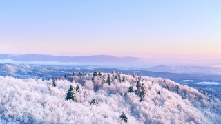 Snow Covered Winter Trees Beautiful Nature At Sunset Sunrise Winter Vacation Snowy Pines Vibrant Colors Aerial 4k
