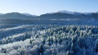 Snow Covered Winter Trees Alpine Landscape At Sunset Sunrise Holiday Travel And Tourism Snowy Pines Vibrant Colors Aerial 4k