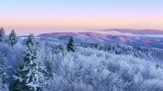 Mountain Frosty Winter Trees Misty Alpine Landscape At Sunset Sunrise Winter Vacation Frosty Pines Vibrant Colors Aerial 4k