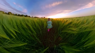 Father Holding Spinning Daughter Running Trough Wheat Field In The Spring Holiday Happy Childhood 360 Vr Footage First Person 8k Slow Motion