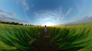 Father And Child Running Trough Wheat Fields During Sunset Holiday Happy Childhood 360 Vr Footage First Person 8k Slow Motion