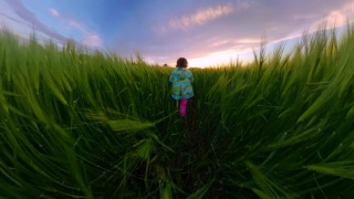 Beautiful Little Girl Running Trough Wheat Fields During Sunset Vacation Happy Childhood 360 Vr Footage First Person 8k Slow Motion