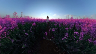Cute Little Girl Playing Outside Enjoying Sunset During Vacation Runnig Trough Rapeseed Harmony And Happiness Happy Family 360 Vr Footage First Person 8k Slow Motion