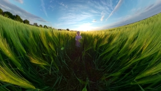 Beautiful Little Girl Running Trough Wheat Fields During Vacation Vacation Happy Family 360 Vr Footage First Person 8k Slow Motion