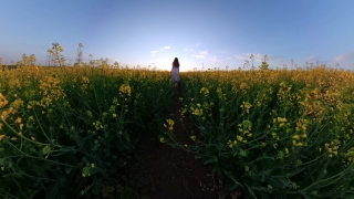 Cute Female Toddler Running In The Park In The Summer Rapeseed Field Love Happy Family 360 Vr Footage First Person 8k Slow Motion