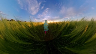 Pov Fathers And Child Running Trough Wheat Fields During Vacation Travel Restrictions Happy Childhood 360 Vr Footage First Person 8k Slow Motion