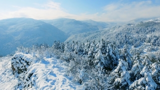 Idyllic Landscape Snow Covered Trees Drone Footage Winter Nature Beautiful Europe Aerial Forest Mountain Season Travel White Frozen Famous Tourism