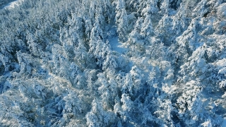 Aerial Snow Covered Landscape Drone Footage Trees Winter Nature Beautiful Europe Majestic Forest Travel White Famous Idyllic Tourism