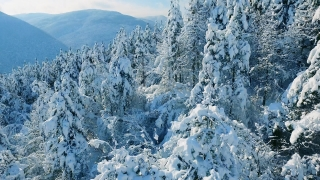Winter Snow Covered Trees Nature Beautiful Mountain Drone Footage Europe Aerial Forest Season Travel White Frozen Famous Idyllic Tourism