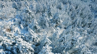 Aerial Footage Snow Covered Forest Trees Winter Nature Drone Majestic Beautiful Europe Famous Idyllic Tourism Travel White
