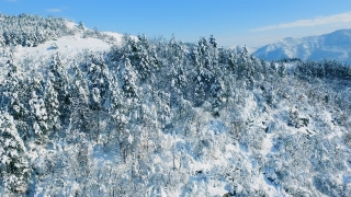 Idyllic Drone Footage Snow Covered Trees Nature Beautiful Winter Mountain Europe Aerial Forest Season Travel Famous White Frozen Tourism