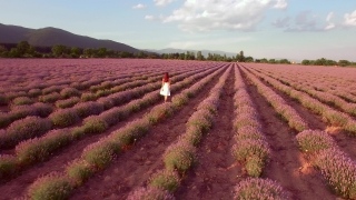 Young Beautiful Woman Walking Through Lavender Field At Sunset Aroma Treatment Freedom Outdoors Happiness Beauty UHD 4K