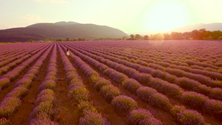 Happy Young Beautiful Woman Running Through Lavender Field White Dress Independence Happiness Freedom Joy Peace Concept UHD 4K