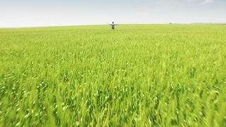 Farmer Field Wheat Agriculture Nature Person Crop Summer Food Outdoor Rural Sky Man Male Countryside Blue Grain Agricultural Country  Aerial UHD 4K