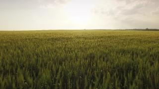 Field Sunset Agriculture Sky Nature Farm Summer Season Meadow Cloud Countryside Plant Landscape Green Grass Sun Sunlight Sunrise Country Beautiful Background Outdoor Aerial UHD 4K