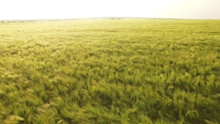 Food Summer Nature Sun Spring Field Sunset Sky Grass Meadow Agriculture Cloud Sunrise Countryside Season Country Beautiful Landscape Natural Green Rural Farm  Aerial UHD 4K