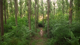 Beautiful Young Woman Hipster Dress Walking In Enchanted Forest Aerial Drone Shot Sunset Fantasy Fairy Tale Concept