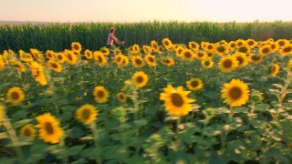 Beautiful Cowgirl Woman Riding Becycle On Rural Raod Agriculture Field Sunflowers Sun Shining Sunset Happiness Farming Life Countryside Beauty