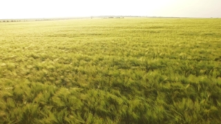 Agriculture Sky Season Meadow Cloud Countryside Plant Landscape Green Grass Sunlight Sunrise Country Beautiful Outdoor Natural Rural Sunny Land Fresh Aerial UHD 4K