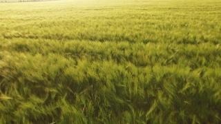 Field Sunset Grass Beautiful Green Sky Nature Sun Meadow Agriculture Cloud Sunrise Summer Countryside Season Country Landscape Natural Rural Farm Spring Outdoor  Aerial UHD 4K