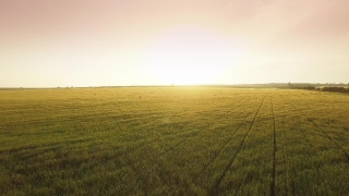 Wheat Field Farmer Agriculture Sky Countryside Nature Man Crop Rural Summer Person Landscape Farming Plant Worker Farm Agricultural Grain Country Food Outdoor Aerial UHD 4K