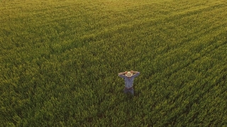 Food Person Summer Man  Technology Sun Spring Wheat Field Farmer Agriculture Sky Countryside Crop Rural Landscape Farming Plant Worker Farm Agricultural Grain  Aerial UHD 4K