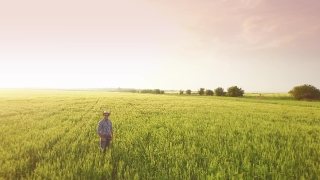 Field Wheat Agriculture Adult Nature Person People Man Rural Farmer One Lifestyle Male Sky Blue Countryside Landscape Outdoors Outdoor Crop Summer Growth Looking  Aerial UHD 4K