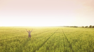 Business Hand Food Person Summer Man Nature Sun Spring Field Wheat Agriculture Adult People Rural Farmer One Lifestyle Male Sky Blue Countryside Landscape  Aerial UHD 4K
