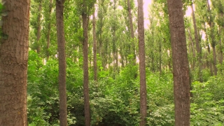 Aerial Close Up Into Green Beautiful Wild Nature Forrest Trees Sunset Tracking Shot