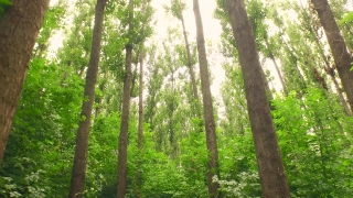 Forest Trees Passing Tracking Shot Sunset Fly By Drone Aerial Close Up Nature Green Ecology Environment Preservation Concept