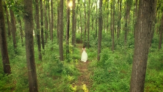 Beautiful Bride Walking Through Forest Sunset Rays Passing Through Trees Afterlife Religion Christianity Spirituality Beauty Nature Concept