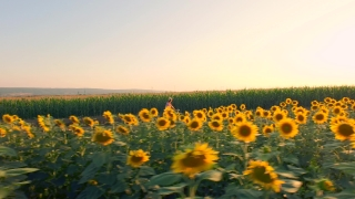 Beautiful Farm Girl Model Riding A Bicycle Through Rural Sunflower Field Summer Beauty Crops Grow Outdoor Off-Road Nature Farming Carefree Concept