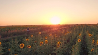 Summer Sunset Nature Field Young Woman Riding Bicycle Nature Beauty Spirituality Youth Christianity Afterlife Concept