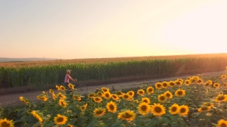 Beautiful Woman Farmer Riding Becycle Countryside  Summer Road Agriculture Sunflower Fiield Happiness Vintage Country Slow Motion