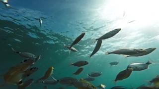 Background Beach Water Silhouette Food Sport Summer Nature School Fish Sun Animal Underwater Ocean Sea Marine Tropical Blue Scuba Aquatic Reef Deep Diving Wildlife Travel Wild Coral Life Sunlight Gopr