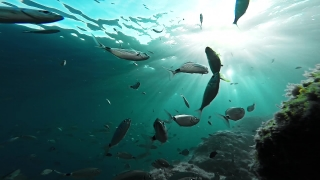 Background Beach Water Silhouette Food Sport Summer Nature School Fish Sun Animal Underwater Ocean Sea Marine Tropical Blue Scuba Aquatic Reef Gopro HD